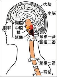 首の構造の図
