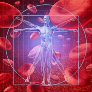 18859848 - health care research medical concept with a vitruvian human skeleton man and body with a group of floating red blood cells circulating in a vein