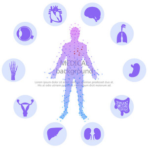 39644685 - medical background. human anatomy.